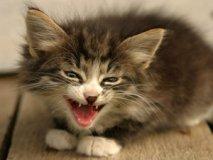 Что делать если отравился котёнок?