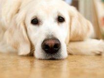 Чем лечить собаку при отравлении