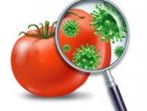 Как отличить пищевое отравление от кишечной инфекции