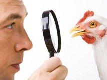 Отравление курицей