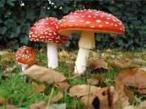 Мускарин — алкалоид из грибов