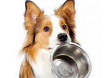 Чем кормить собаку при отравлении