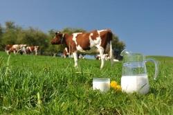 молоко при отравлении можно ли