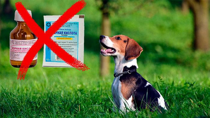 отравление борной кислотой у собак