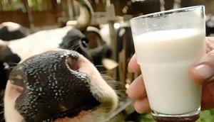 проверка молочных предприятий