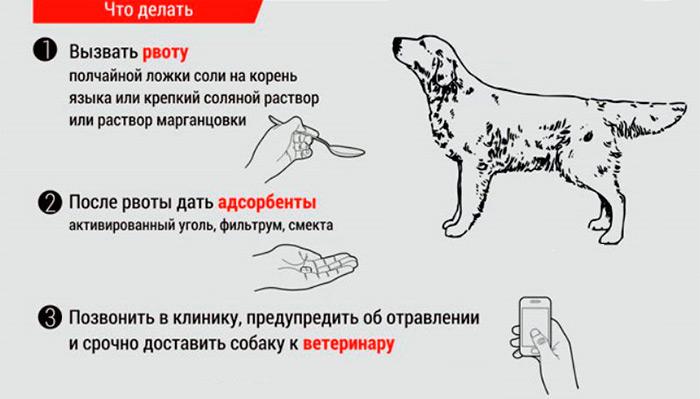 первая помощь при отравлении собаке