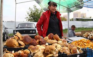 покупка грибов у частных лиц