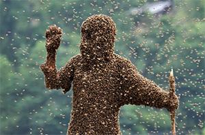 пчёлы облепили всего человека