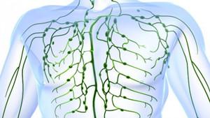 Лимфатическая система и ее очистка