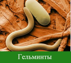 очистка от паразитов