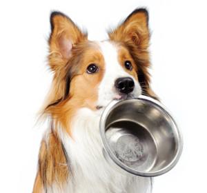 собака отравление