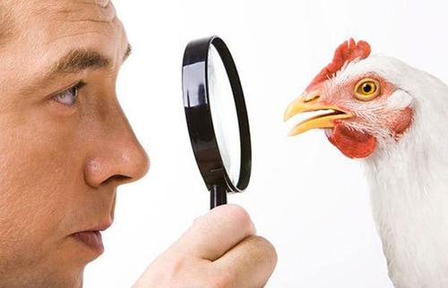 причины отравления куриным мясом