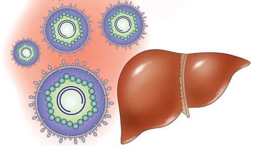 Токсический гепатит лечение народными средствами