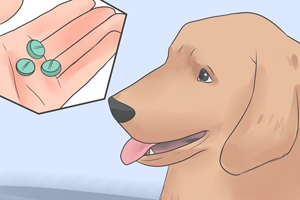 лечение отравления крысиным ядом у собак