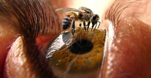 вред от яда пчелы