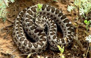 разновидности ядовитых змей