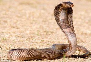 какие бывают змеи фото