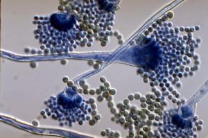 как выглядят микотоксины