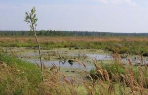 метановые испарения на болоте