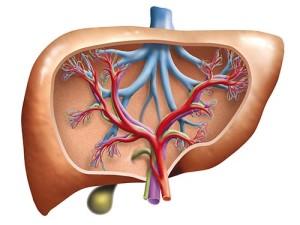 воздействие афлатоксинов на печень человека