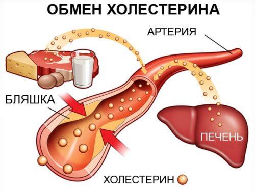 как происходит обмен холестерином