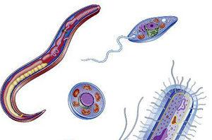 виды паразитов рисунок
