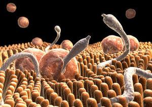 паразиты в организме человека документальные фильмы