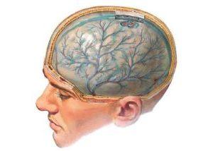 как выглядит мозг человека