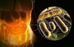 бактерии в кишечнике человека