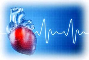 человеческое сердце на фоне графика энцефалограммы