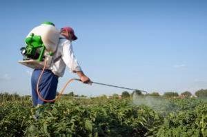 мужчина опрыскивает картофель от колорадского жука