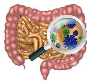 кишечник человека и токсины в нём