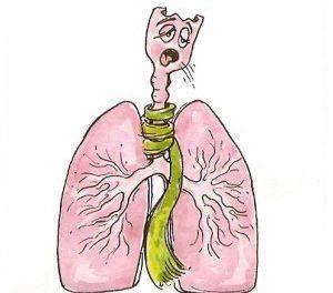 рисунок лёгких человека
