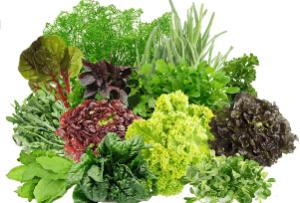 пучки зелени — капуста, укроп, сельдерей, шпинат