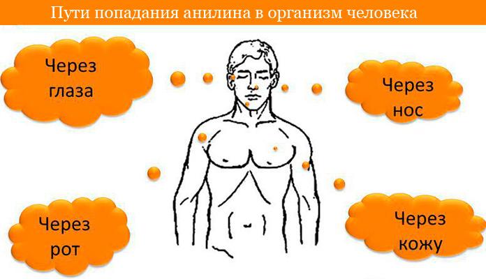 как анилин попадает в организм человека