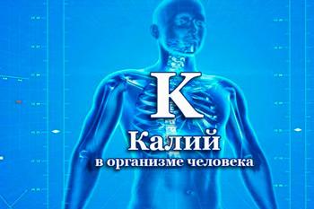 калий в организме человека