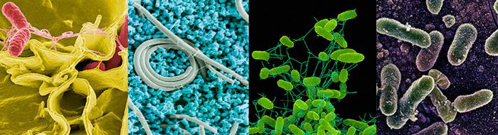 бактерии возбудители пищевых отравлений