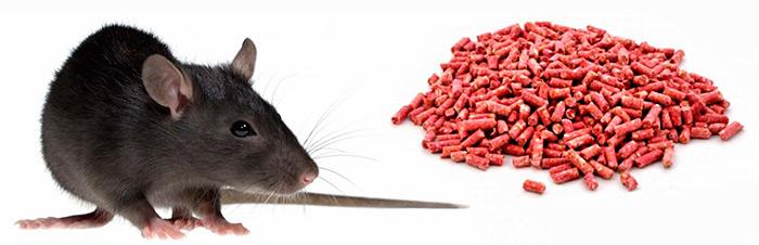 крыса и гранулы отравы с бродифакумом