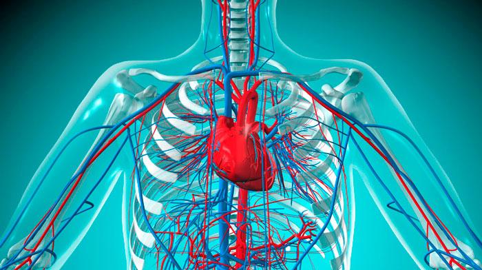 действие яда на нервную и сердечно-сосудистую систему человека