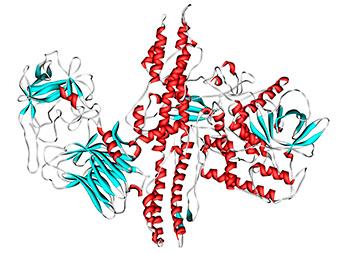 структура ботулотоксина